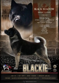 Bearfactz BLACK SHADOW