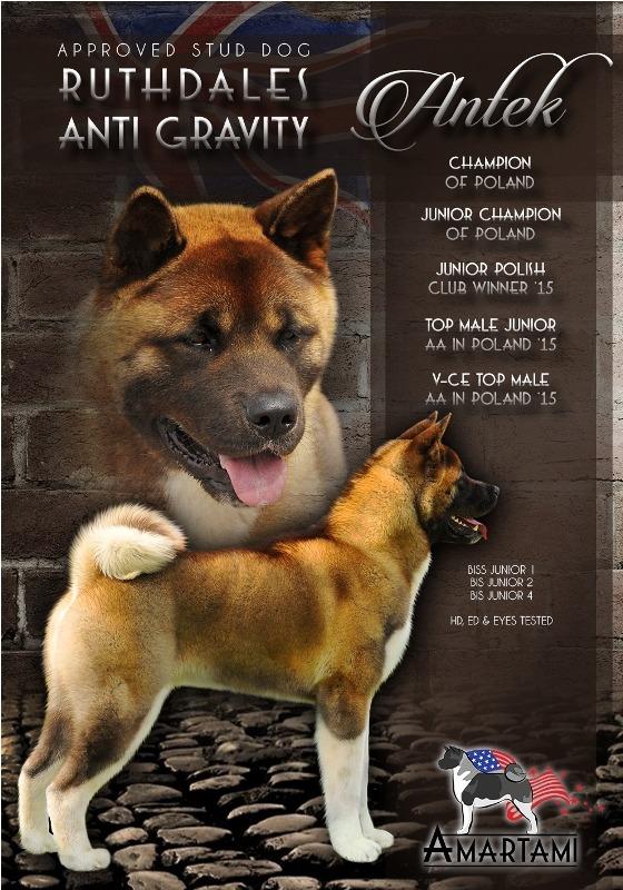 Ruthdales ANTI GRAVITY STUD DOG