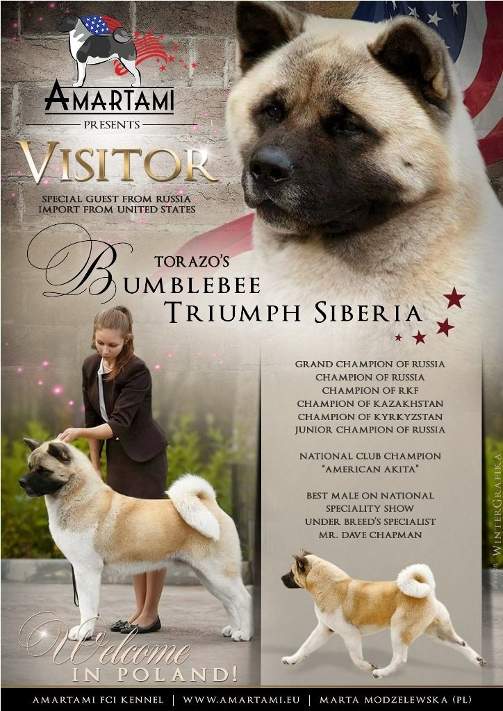 Torazo's Bumblebee Triumph Siberia
